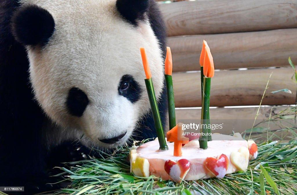 GERMANY-CHINA-ANIMALS-PANDA : News Photo