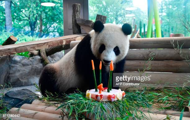 Meng Meng one of two Chinese panda bears in the zoo Berlin receives a birthdaycake to mark its fourth birthday in the enclosure at the Zoologischer...