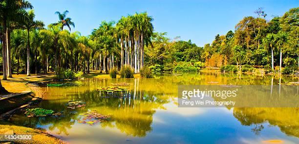 Menglun tropical botanical garden, Xishuangbanna