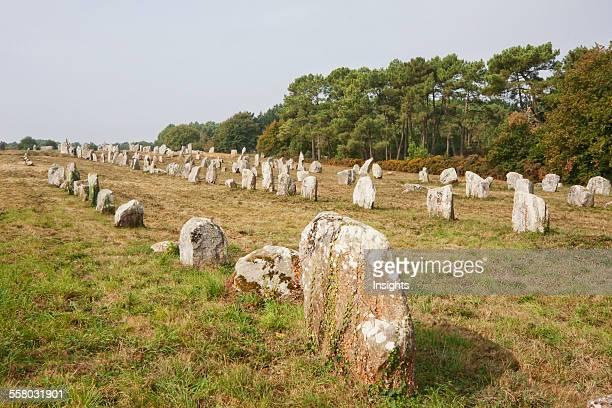 Menhirs In The Kermario Alignments Carnac Morbihan France