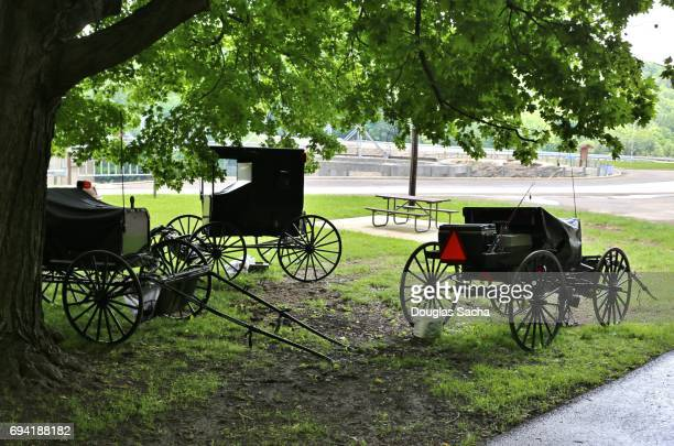 Mennonite and Amish carriages under a tree area, Mohican State Park, Loudonville, Ohio, USA