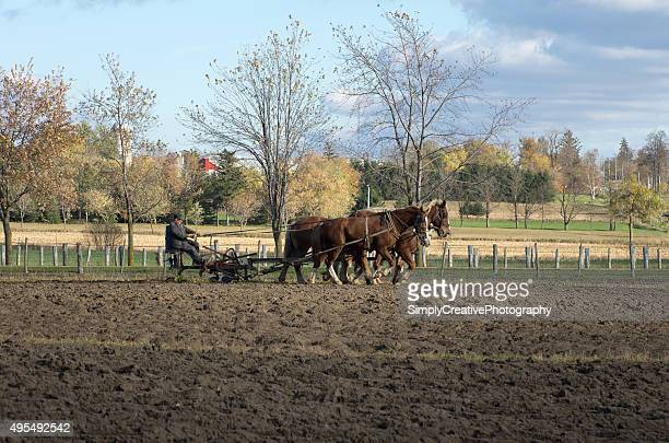 Mennonite Farmer Plowing Field with Horses