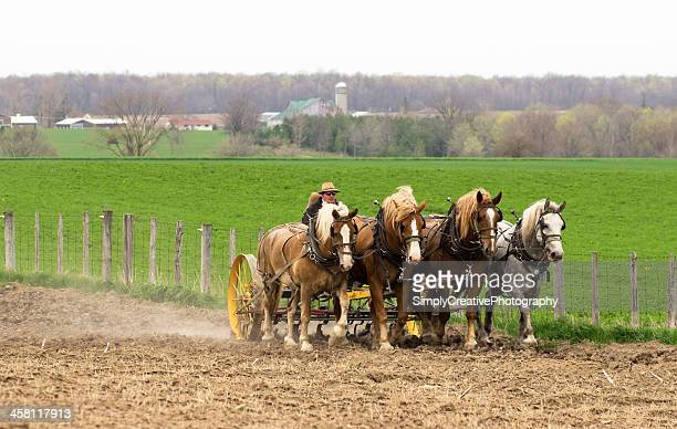 Mennonite Farmer with Horses in Spring