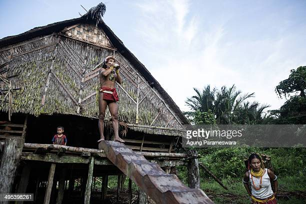 Mentawanese Sikerei Aman Lepon blows a shell to call his family from the other home during preparation Inauguration Ritual preparation for Aman...
