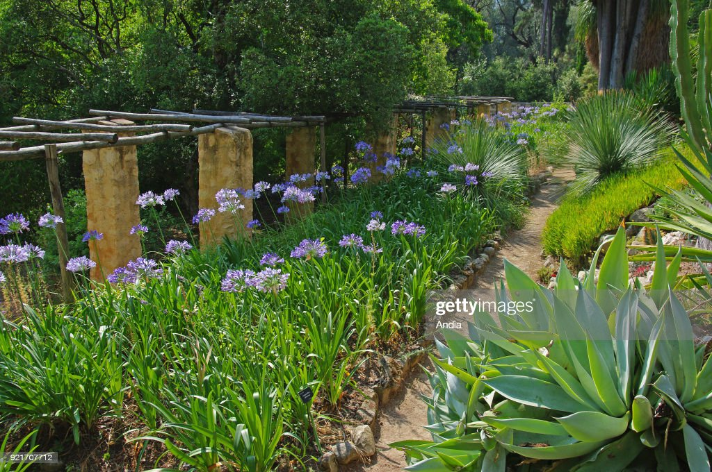 Ornamental garden 'Serre de la Madone'. : News Photo
