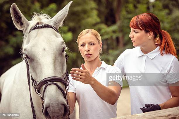 Mentor explaining horse harnesses to her student