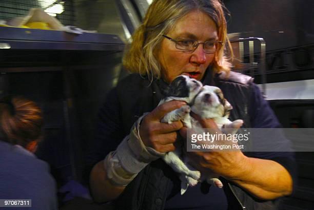 PuppyMill DATE: November 9, 2007 CREDIT: Carol Guzy/The Washington Post Fairfax VA Chris Kopp volunteer with Fairfax animal shelter, rushes puppies...