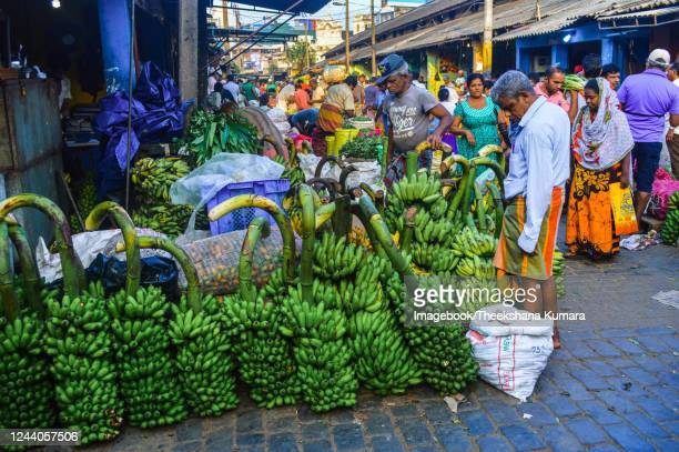 merchants trade huge volumes of bananas. - imagebook stock pictures, royalty-free photos & images