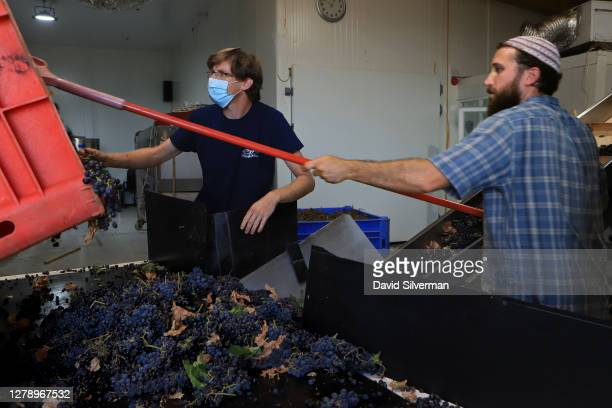 Merlot grapes, the last pick of Ortal Winery's 2020 harvest, are received at the winery on October 5, 2020 at Kibbutz Ortal in Israel's Golan...