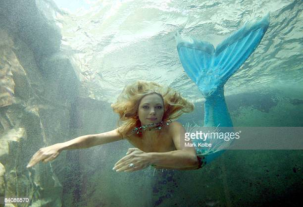'Mermaid' Hannah Fraser swims in the new exhibit at Sydney Aquarium built to house dugongs Pig and Wuru on December 19 2008 in Sydney Australia The...