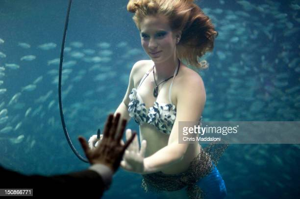 A mermaid swims during the 'Spirits of Tampa' party sponsored by the Distilled Spirits Council at the Florida Aquarium during the 2012 Republican...
