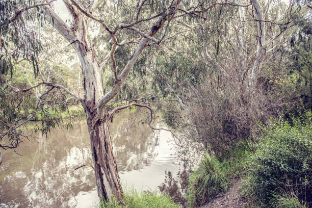 Merri Creek flowing to join the Yarra River in Melbourne