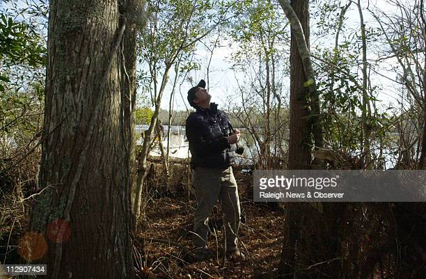 Merrill Lynch of The Nature Conservancy inspects some mature hardwoods on Thoroughfare Island in North Carolina January 10 2008