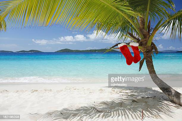 merry christmas from the caribbean - caribbean christmas stock pictures, royalty-free photos & images