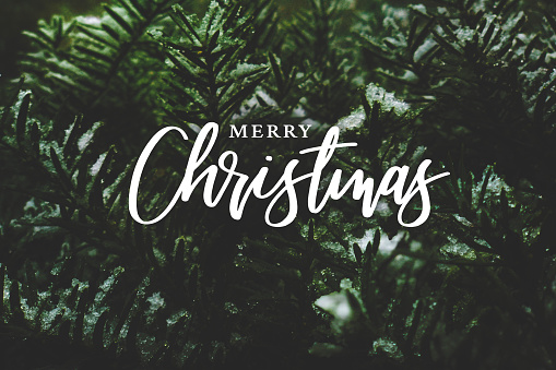 Merry Christmas Script Over Evergreen Tree Background 1173491413