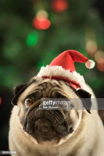 Merry Pugmas!
