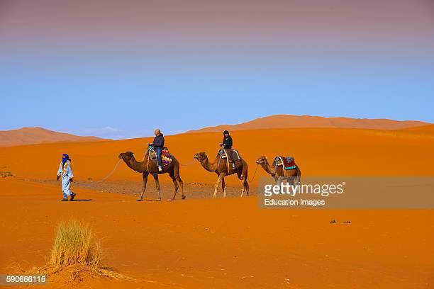 Merzouga Erg Chebbi Camel trekking Merzouga sand dunes Sahara Desert Morocco Maghreb North Africa