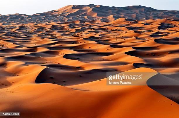Merzouga sand dunes at sunrise, Sahara