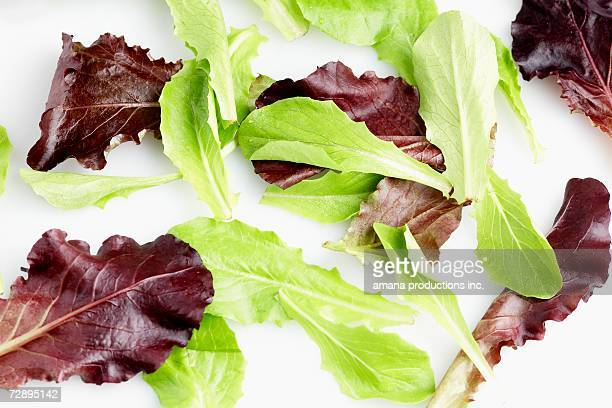 Mesculan mix salad (close-up, full frame)