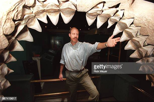 MESharks#21108RM/b Curator Jeff Seigel stands in the five–foot mouth of a fossil shark jaw The shark is called Carcharoles Megalodon and was large...