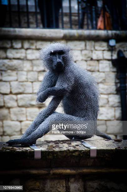 meshed monkey - hank vermote stock pictures, royalty-free photos & images