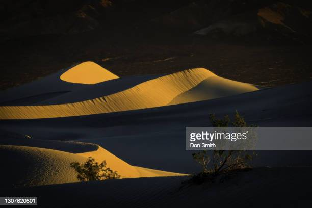 mesquite bushes and mesquite dunes at sunrise, death valley national park - don smith stock pictures, royalty-free photos & images