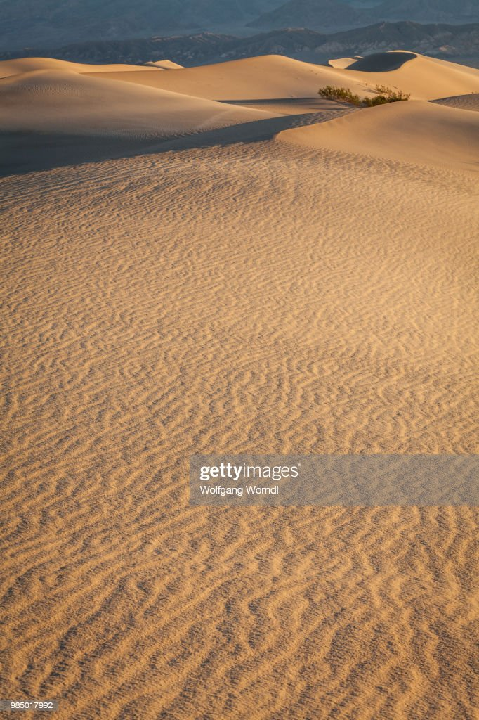 Mesquite Dunes : Stock Photo