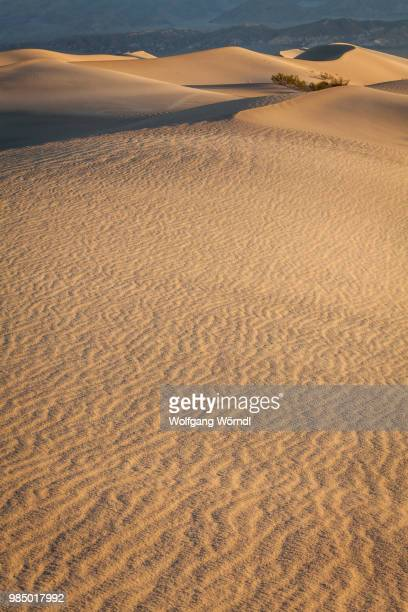 mesquite dunes - wolfgang wörndl stock pictures, royalty-free photos & images