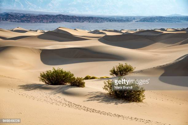 Mesquite Flat Sand Dunes, bushes, Amargosa Mountain Range foothills, Death Valley National Park, California, USA