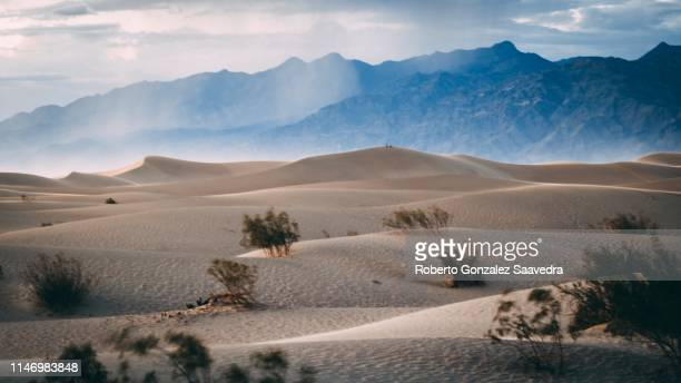 mesquite sand dunes - great basin stock pictures, royalty-free photos & images