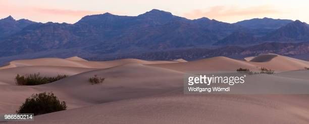 mesquite sand dunes - wolfgang wörndl stock pictures, royalty-free photos & images