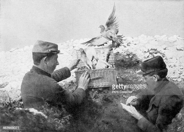 Messenger pigeons being released at the front line World War I 1915
