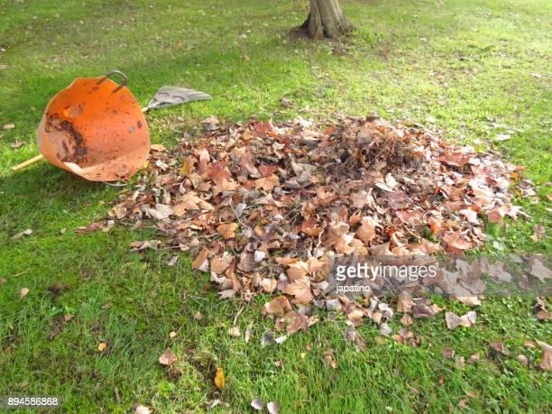 Messthetics. Bucket full of fallen leaves of trees overturned