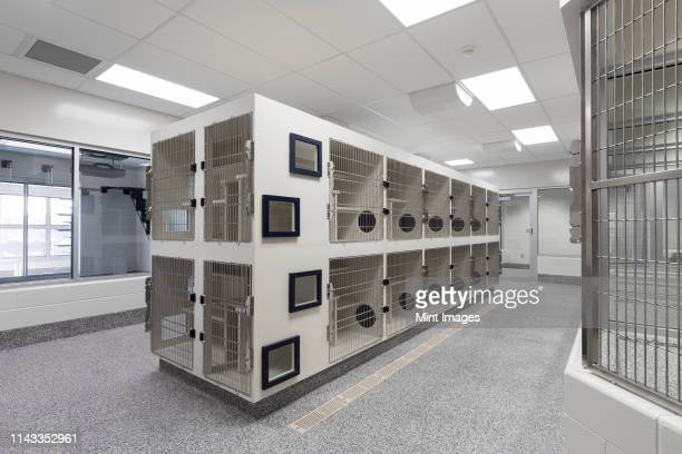 metal doors of empty cages in animal shelter - humane society stock pictures, royalty-free photos & images
