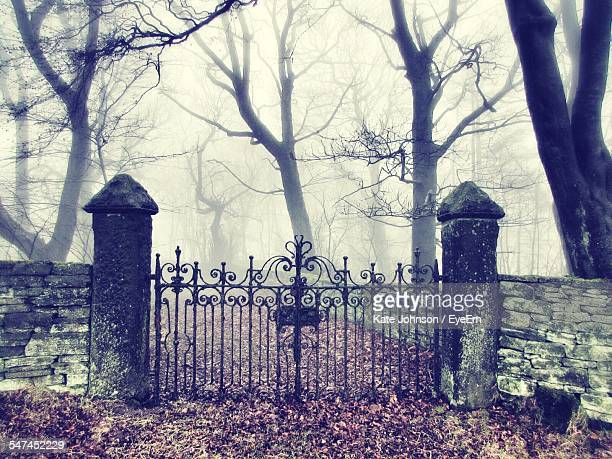 Metal Gate And Bare Trees In Foggy Weather During Autumn