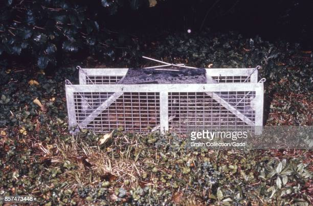 Metal Havahart nonlethal animal trap set up in the woods during an arbovirus study 1974 Image courtesy CDC