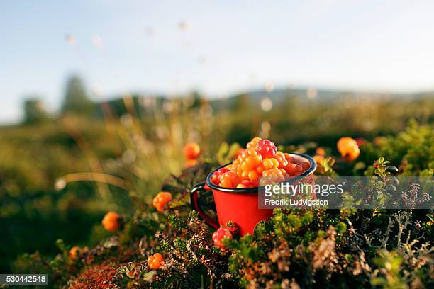 Metal mug full of cloudberries