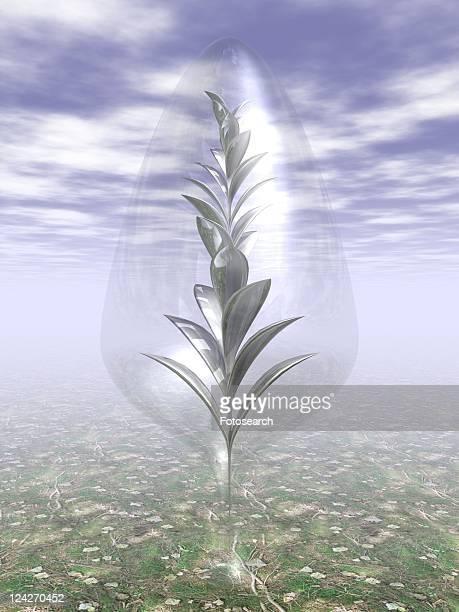 Metal shaped plant inside glass