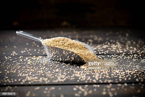Metal shovel of unpeeled sesame on dark wood