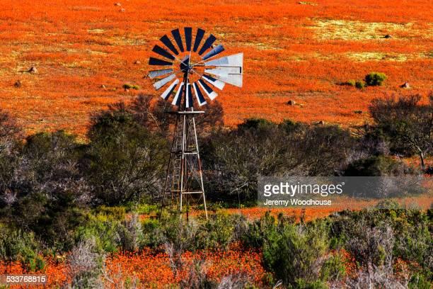 metal windmill in field in rural landscape - ナマクワランド ストックフォトと画像