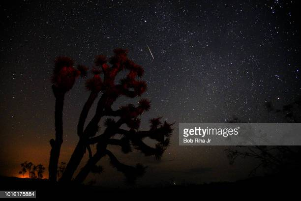 A meteorite streaks over a Yucca Tree on August 13 2018 near Death Valley during annual Perseid Meteor Shower in Trona California