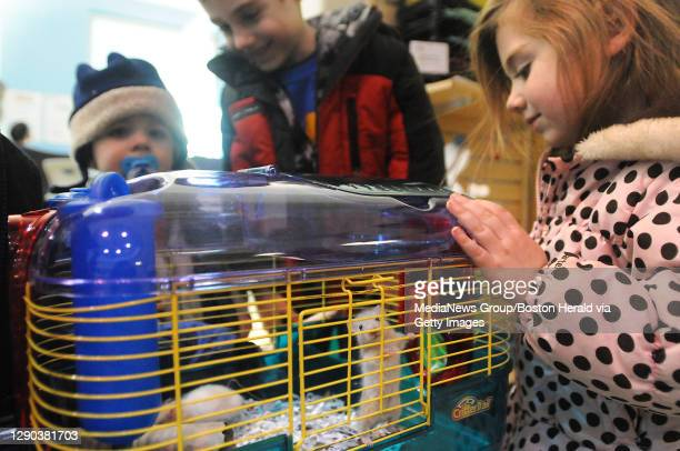 Methuen, MA) Evan, 19 mo, Aidan, 5 and Eleanor, 3 of The Zimmer family adopts 3 hamsters from Nevins farm who aquired over 90hamsters from a man who...