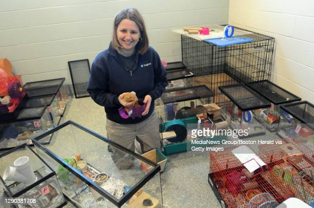 Methuen, MA) Heather Robertson Community Outreach Co-ordinator at the MSPCA Nevins Farm holds a few hamsters that were acquired over 90hamsters from...
