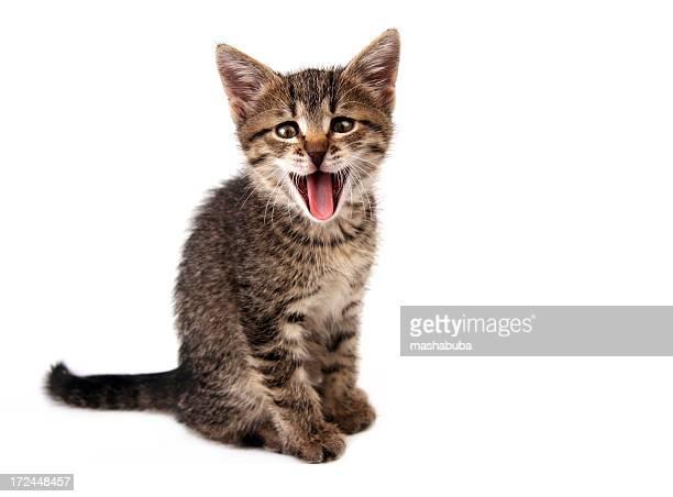 Mew!!!!!!!!!