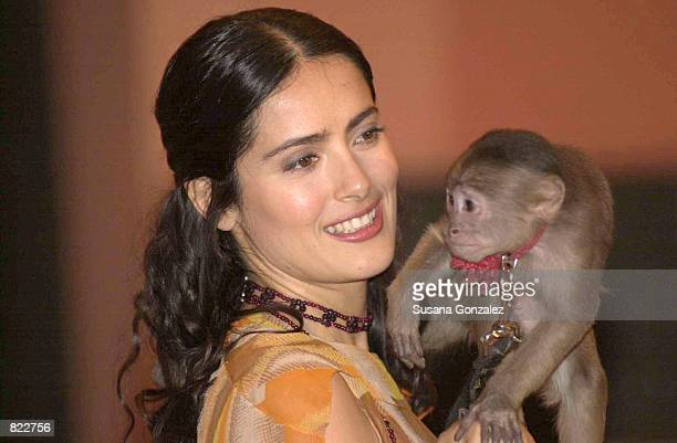 Mexican actress Salma Hayek holds Tyson the spider monkey at a press conference about the movie Frida Kahlo April 5 2001 in Mexico City Hayek plays...