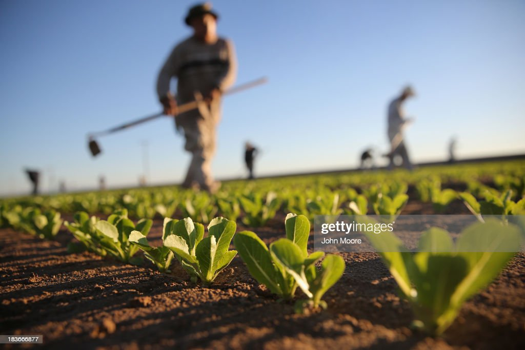 Migrant Workers Farm Crops In Southern CA : News Photo