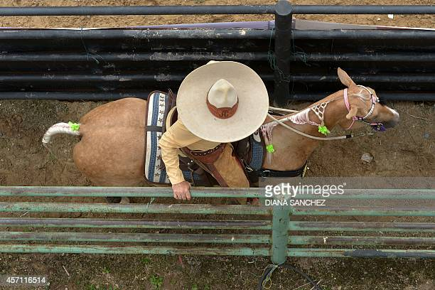 A Mexican cowboy rides during the 18th Coleo World Championship in Villavicencio Meta department Colombia on Oct 11 2014 Competitors from Colombia...