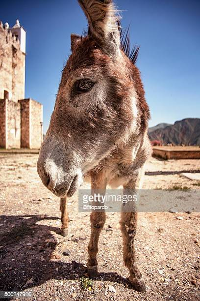 Mexican Donkey Stock Photos And Pictures  Getty Images-3724