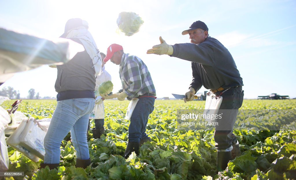 US-ECONOMY-MIGRANTS-FARMING : News Photo