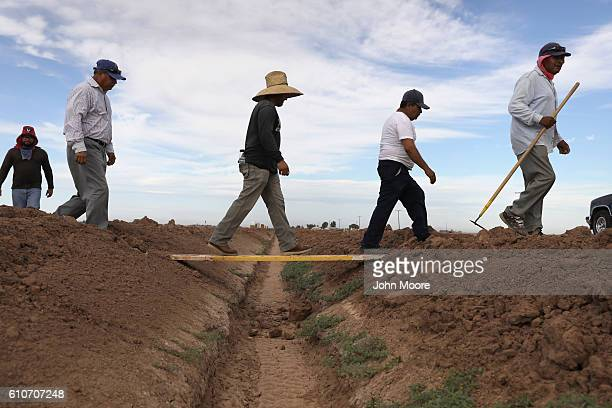 Mexican farm workers take a break from hoeing a cabbage field on September 27 2016 in Holtville California Thousands of Mexican seasonal workers...